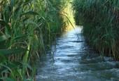 Imagine canal Delta Dunarii