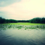 Imagine din Delta Dunarii
