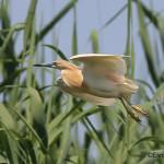Birdwatching_2