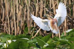 Birdwatching_3