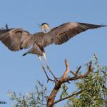 Birdwatching_6