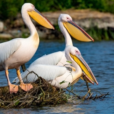 foto-birdwatching in delta dunarii, foto-birdwatching, verada tour, pelicani mila 23, excursie in delta dunarii, verada tour agentie de turism pe apa, verada tour excursii in delta dunarii, excursii in delta dunarii cu plecare de pe litoral